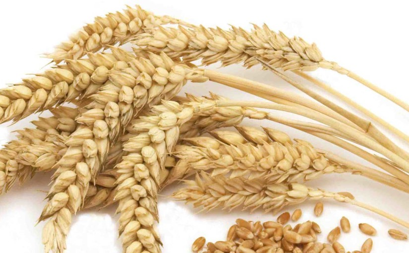 What Is Gluten Free Food? Gluten Free Myth vs. Fact!